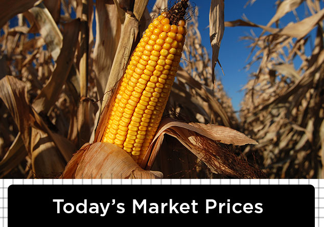 Today's Market Prices