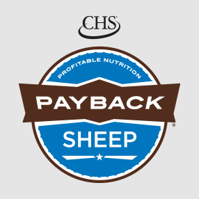 Payback Sheep Feed